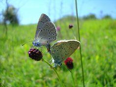 Votează insecta anului în România