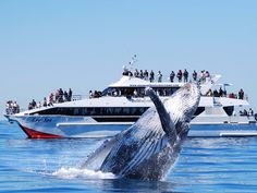 Eye spy --Brisbane Whale Watching - Tour - Queensland Out of redcliffe , but has option of transfer back to Brisbane by bus -- check uber prices (30min north Brisbane)