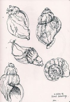 beautiful fine line pen drawings of shells by my friend @Alice Cartee Du Port
