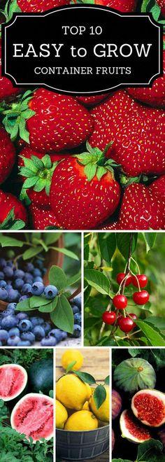 Growing Vegetables Top 10 Easy to Grow Container Fruits Fruit Garden, Edible Garden, Fruit Plants, Potted Plants, Garden Pots, Tree Garden, Container Plants, Container Gardening, Succulent Containers