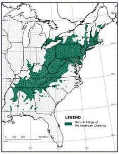 The American chestnut tree reigned over 200 million acres of eastern woodlands from Maine to Florida, from the Carolinas up to the Ohio Valley. Forest Ecosystem, American Chestnut, Agricultural Science, Container Vegetables, Cartography, Blue Ridge, Native Plants, West Virginia, Habitats