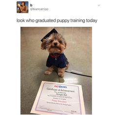 """Bruh. Homegirl named her pupper """"Stringer Bell""""? I'm dead . Finna adopt a pup and name it Honeydew Essence Apple Delight. Bonus - I can call it HEAD for short. Because there's nothing I love more than Head (I'm literally not funny u can unfollow now smh )"""