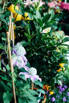 Floral tour through #Hamburg from @Steph Long Love #flowers, #shops, #sistermag, #sistermag9