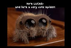 47 Best Lucas The Spider Images Lucas The Spider Hand