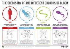 Flat design infographic on blood colors.  Really simple and elegant.