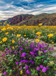 The Blooming Desert