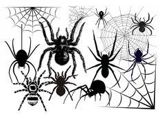 Spider / tarantula clip art images - black and white - Instant download digital clip art