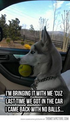 Wonderful All About The Siberian Husky Ideas. Prodigious All About The Siberian Husky Ideas. Funny Shit, Funny Cute, Funny Stuff, Funny Laugh, Memes Lol, Dog Memes, Dog Humor, Funny Memes, Dog Funnies