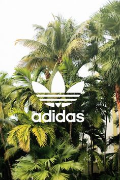 adidas, background, and wallpaper-bilde