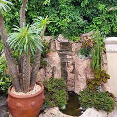 A little corner of #Cactus own personal waterfall @themunrohotel #Houghton #Johannesburg #SouthAfrica #TheLifesWay #Photoyatra . . . . . #photographyeveryday #photographylover #worldbestgram #aashishRai #lifestyle #technology #influencer #SocialMediaInfluencer #Blogger #Summer #JohannesburgCityLife #walkingwithcamera #photographerwithpassion #GalaxyNote8 #DoBiggerThings #shotwithmygalaxy #Naturelover #Nature #Flowers #iglobal_photographers #ig_great_pics #instagrammer www.thelifesway.com