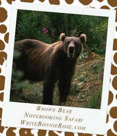 Notebooking Safari - Russia and the Brown Bear. You had better stay on your toes while we try to catch a glimpse of our next safari animal. This is one creature you do not want to surprise—or get in the way of! It's the brown bear, one of the largest carnivores you could ever see. Brown bears have a very large range, across much of northern Russia, Alaska, and parts of Canada and the northwestern United States.
