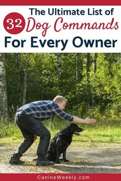 You don't need a pricey dog trainer to get your pet to follow your lead. With a bit of time, effort, and gumption, you can train your dog just as effectively as a trainer while building a strong bond with the new member of your family. Check this Ultimate List of 32 Dog Commands For Every Owner. #dog #doghealth