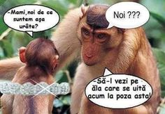 No vezi ţi-ai luat muie Funny Animals, Cute Animals, Funny Pranks, Funny Moments, Cringe, Haha, My Photos, Funny Quotes, Funny Pictures