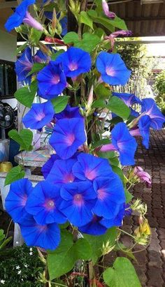 Morning Glory Daniel Humberto Flores - Google+