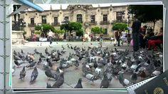 Guadalajara Jalisco zona centro