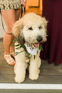 The bride and groom's labradoodle wore a flower collar of italian rucus! This wedding day dog was so happy to be there. To see more of this pup in this Denver wedding check out the rest of the blog post! Barn Wedding Venue, Wedding Day, Rain Photography, Perfect Golf, Signature Cocktail, Labradoodle, Dance The Night Away, Denver, Pup