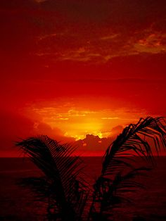 Jamaican Sunset l By Lorie