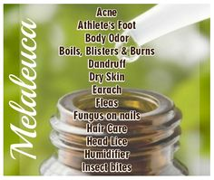 Melaleuca oil (tea tree oil): This stuff is awesome!