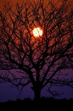 Wernethlow tree