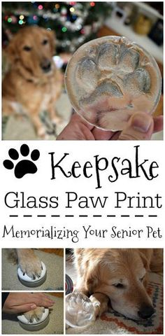 Looking for a lasting keepsake to remember an aging pet by? Hot Paws is a unique kit that allows you to make an impression of your dogs paw which will then be cast in glass! - Tap the pin for the most adorable pawtastic fur baby apparel! You'll love the dog clothes and cat clothes! <3
