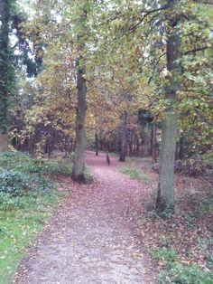 Tannenbusch Waldweg