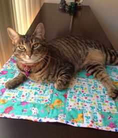 This is the lovely Rosie in Los Angeles CA enjoying her cozy cat quilt from www.etsy.com/shop/pieceandtranquilty