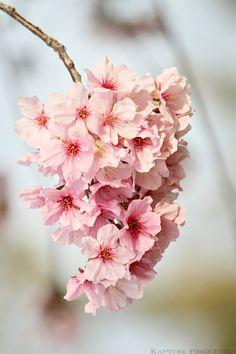 Spring Grape! by OnePiece4Life.deviantart.com on @deviantART