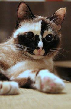 Focused feline. ATTACKOFTHECUTE.COM