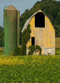 Green Silo & Yellow Barn     rh