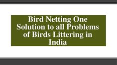 Use Society Bird Netting To Get Rid Of Unwanted Birds Bird Netting, Pigeon, Fungi, Rid, Acting, Industrial, How To Get, Number, Create