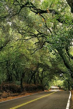 Trabuco Canyon.  How many times did I travel this road?  The Live Oaks are beautiful and I miss those days.