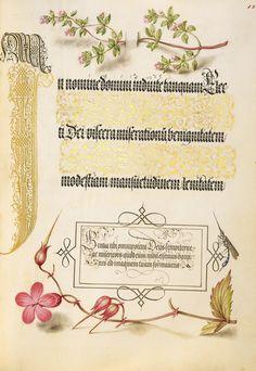 Basil thyme insect and herb robert joris hoefnagel flemish