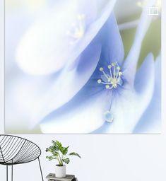 Hortensia in blauw