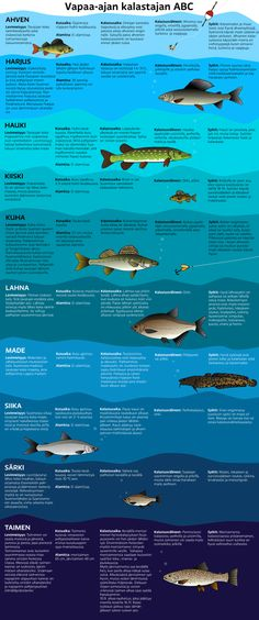 Finnish fish - 10 common species of fish - Vapaa-ajan kalastajan ABC Lappland, Biology For Kids, Finnish Language, Native Country, National Symbols, Helsinki, Gone Fishing, New Things To Learn, Data Visualization