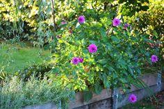 Garden in october