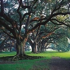 Oak Alley Plantation by New Orleans Louisiana Homes, New Orleans Louisiana, New Orleans Plantations, Southern Mansions, Southern Belle, Southern Charm, Nature Tree, Trees To Plant, Natural Beauty
