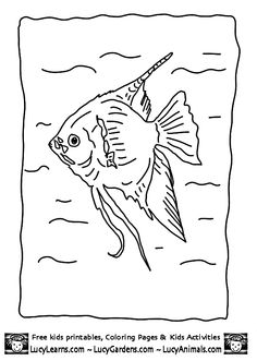 Angelfish Pictures To Color Coloring Coloring Pages