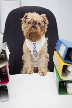 Tomorrow, June 21st is Take Your Dog to Work Day! Click for helpful tips!
