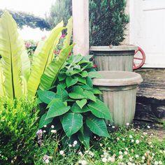 Hometalk | Antique Painted Garden Pots