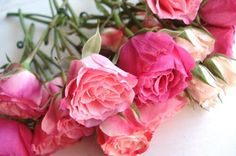 Soft Beauty shared by thenoblestar on We Heart It My Flower, Flower Power, Fresh Flowers, Beautiful Flowers, Pink Roses, Pink Flowers, Different Shades Of Pink, Coming Up Roses, Fruit Plants