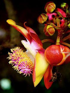 cuban flowers