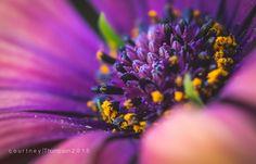 Macro flowers-CourtneyThompson