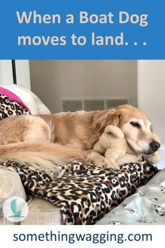 Our cruising boat dog is living on land--for now. Learn about how she's making the transition. Dogs On Boats, Sailboat Living, Walking City, Work Opportunities, Best Mate, Kinds Of Dogs, Therapy Dogs, Old Dogs, Say Hi