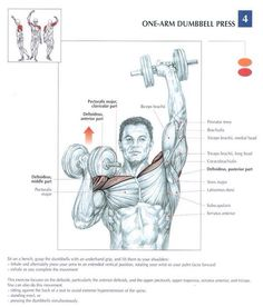 Shoulders can be a tricky muscle group to workout. Defined shoulders can give the arm a great, rock hard defined look. Shoulders seem to get neglected by most people and they don't realize th…