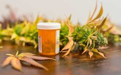 Medical cannabis patients use less opioids, antidepressants, and alcohol, study finds
