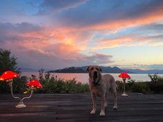 Αυτή Είναι η Ρομαντική Φωλιά ή Μάλλον Βιλάρα της Καρύδη και του Αθερίδη! Δεν Έχετε Ξαναδεί Πιο Όμορφο Σπίτι! Labrador Retriever, Cute Animals, News, Pictures, Labrador Retrievers, Pretty Animals, Cutest Animals, Cute Funny Animals, Labrador