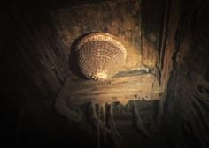Inside titanic wreck the remains of the grand-staircase light fixture still on the ceiling. Rms Titanic, Titanic Real, Titanic Deaths, Titanic Movie Facts, Titanic Ship, Titanic History, Titanic Underwater, Underwater World, Underwater Pictures