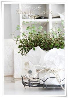White wrapped plant