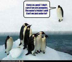 Funny penquin