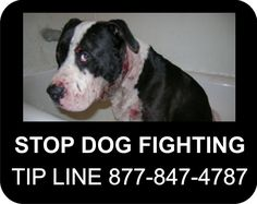 $5,000 Reward to anyone with information on dog fighting.  Tipster's identity is protected as well.  Do the right thing.